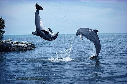 00002dolphins-1-jumping-by-the_shore